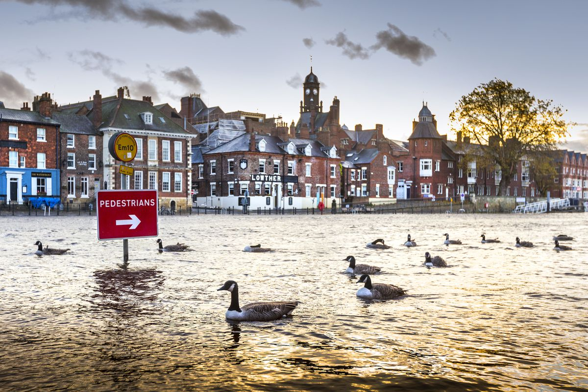 ©Andrew McCaren 31/10/2020 York UK A flock of Canada Goose swim the wrong way down a flooded road in York city centre after the River Ouse broke its banks following torrential rainfall in the UK.
