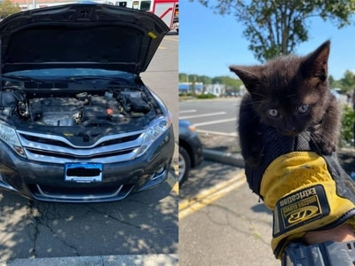 Kitten rescued after getting trapped in car engine
