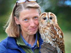 Lisa Scattergood of Shropshire Falconry with Alfie the tawny owl, one of the centre's 'celebrities'