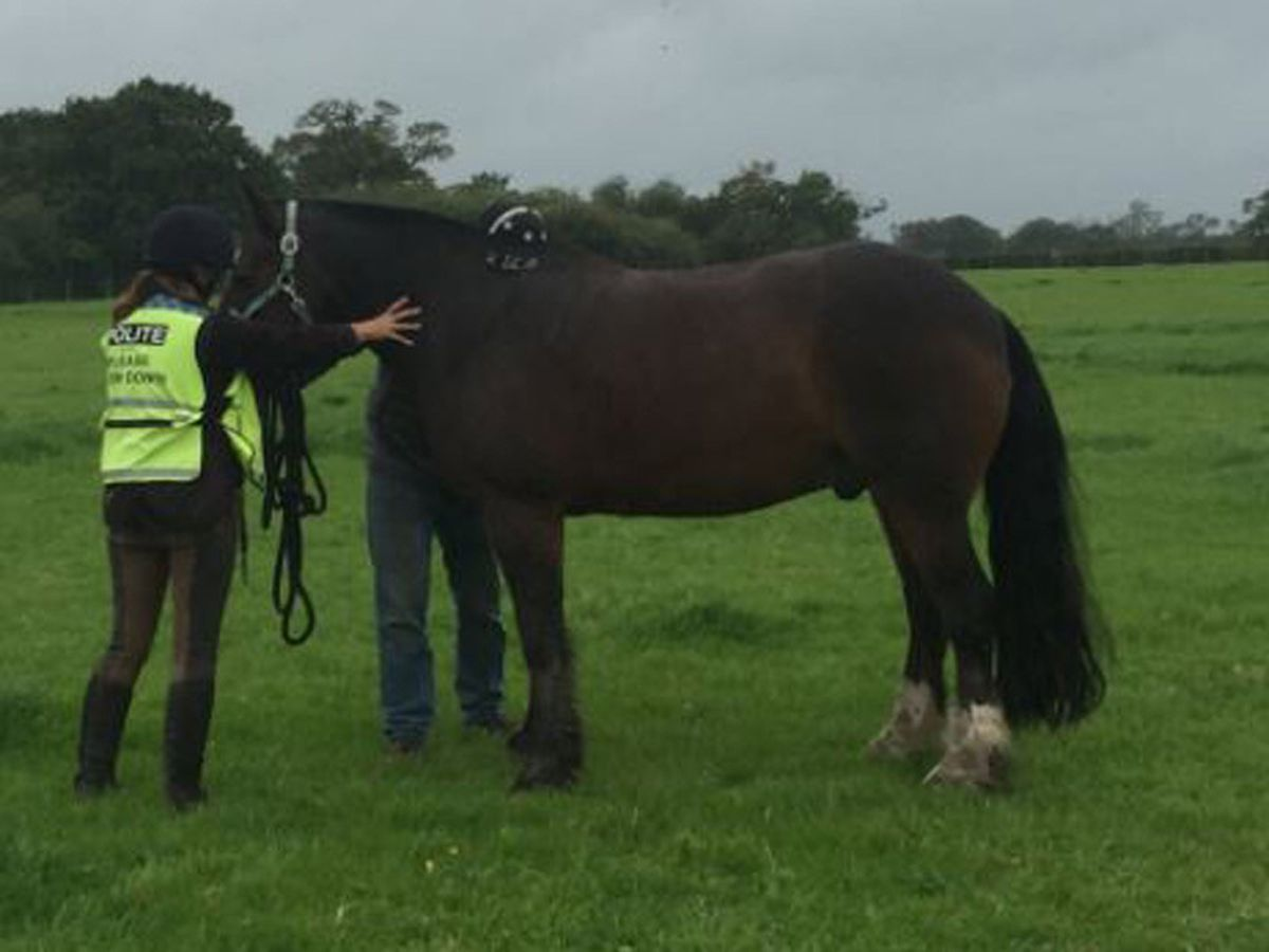 The horse is checked over after its ordeal. Photo: @SFRSWellington