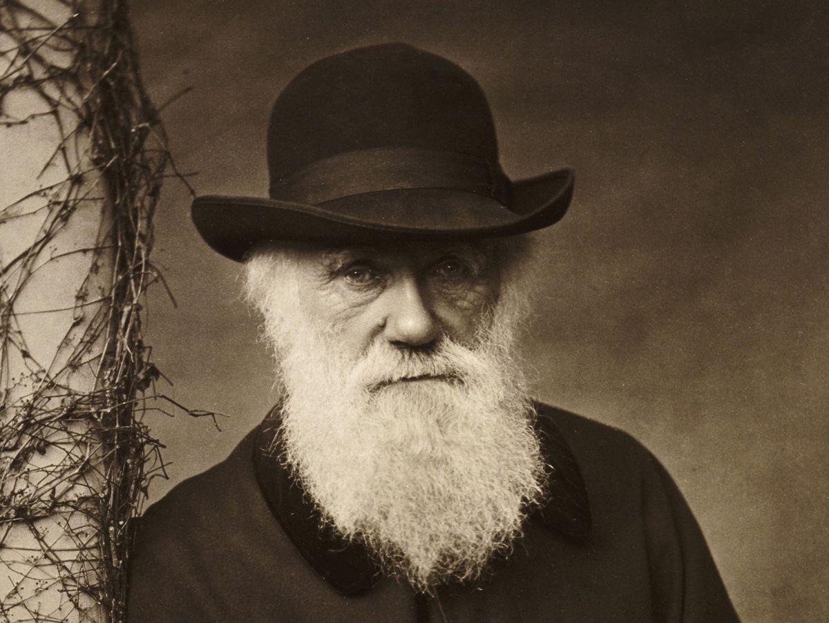 Interesting theory, Mr Darwin