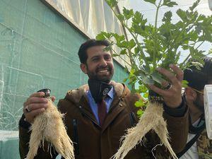 Crops growing in Jordan