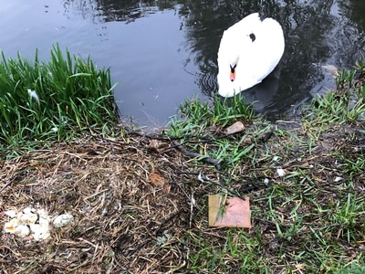 Vandals smash swan eggs at Whittington Castle