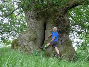 Rob McBride with one of the ancient oak trees