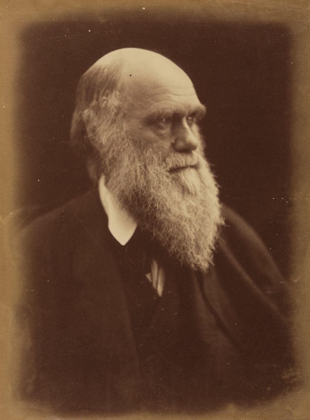 Rare Charles Darwin Book To Sell For 163 50 000 Shropshire Star