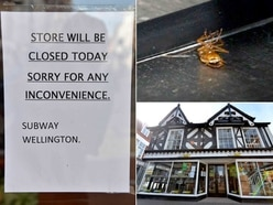 'Cockroach infestation' closes Subway in Wellington