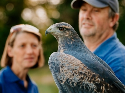 Paco the eagle is star attraction at Shrewsbury show after his escape left keepers in a flap - with pictures and video