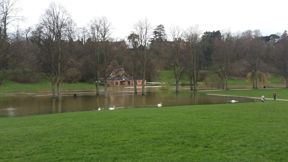 Swans explore new flooded ground in the Quarry Park. Photo: Tim Vasby-Burnie