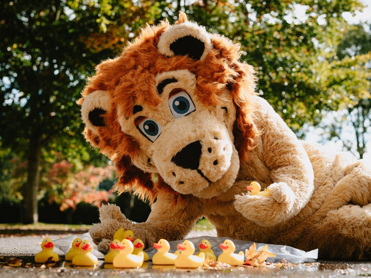 LAST COPYRIGHT SHROPSHIRE STAR JAMIE RICKETTS 13/10/2020 - Bridgnorth Lions are preparing to set hundreds of ducks in the towns second ever race but this time it is going virtual. In Picture: Lenny The Lion with some ducks..