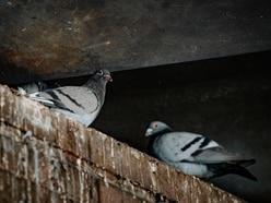 MP calls for action on pigeon poo near Shrewsbury railway station