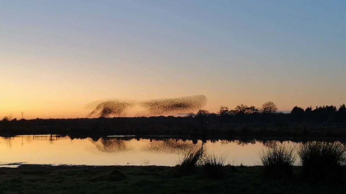Starlings over Whixhall Moss by Christopher Burrage