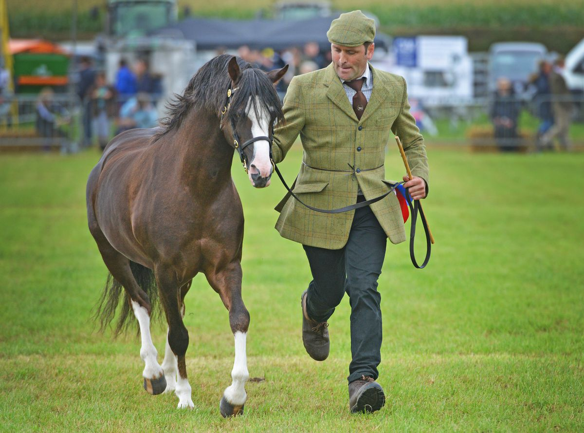 The supreme horse championships