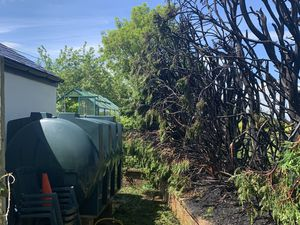 The hedge close to the oil tank. Photo Wem Fire Station