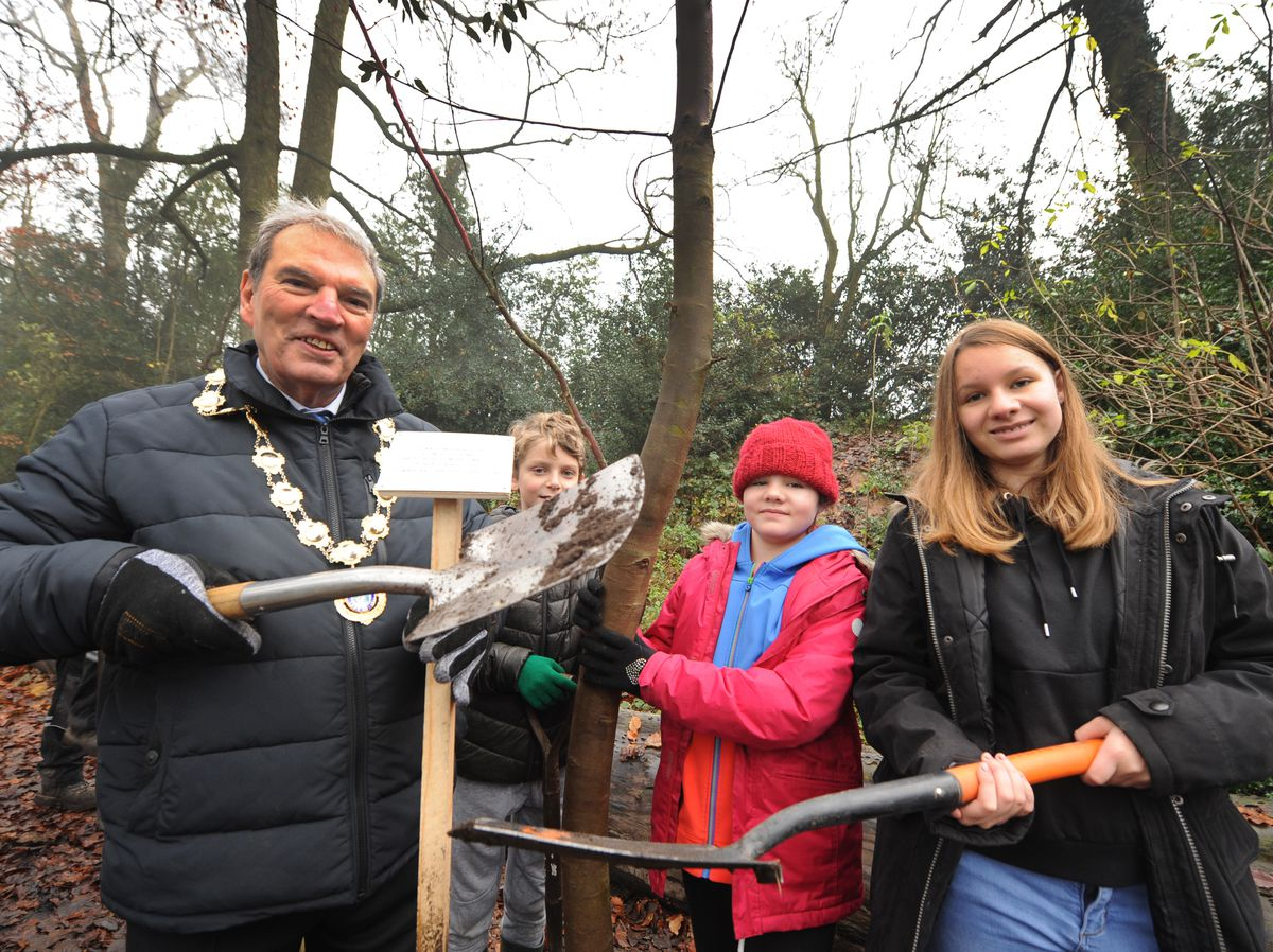 NORTH PIC MNA PIC DAVID HAMILTON PIC  SHROPSHIRE STAR 30/11/2019 Planting a eucalyptus tree, is the mayor of Ellesmere Councillor Paul Golbourne, with help from (left-right) Freddie Tobin, 10, Mini Garvin, 10, and Rosie Garvin, 14, at The Mere, Ellesmere..