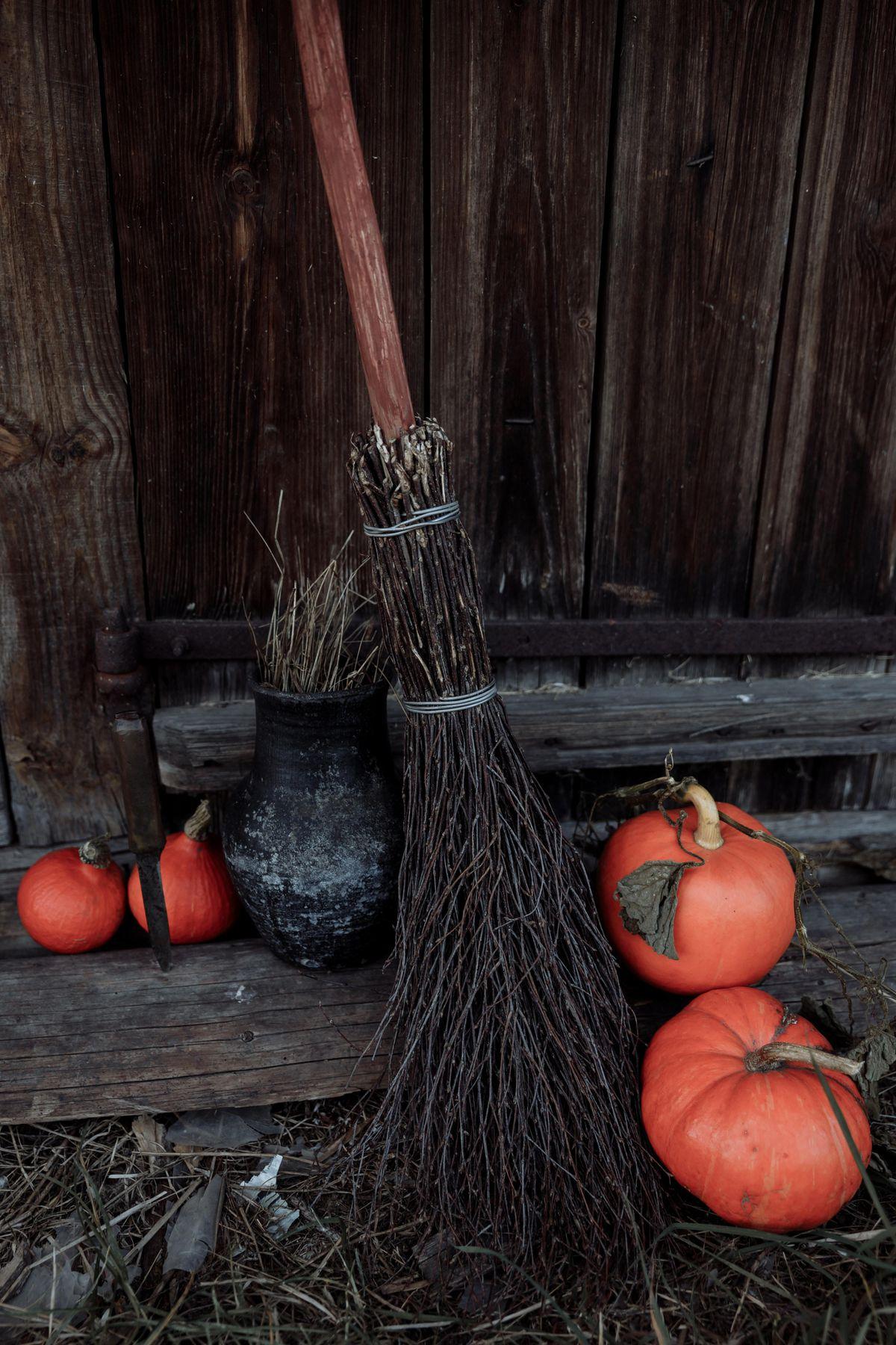 Pumpkin picking for spooky fun at Shrewsbury farm