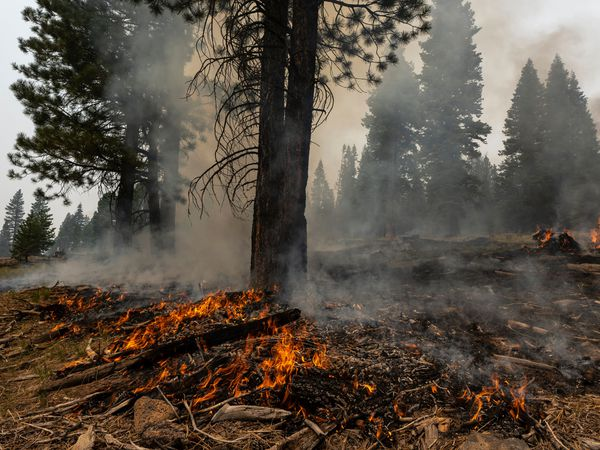 A small brush fire spreads ahead of a containment line near the Northwest edge of the Bootleg Fire in Oregon