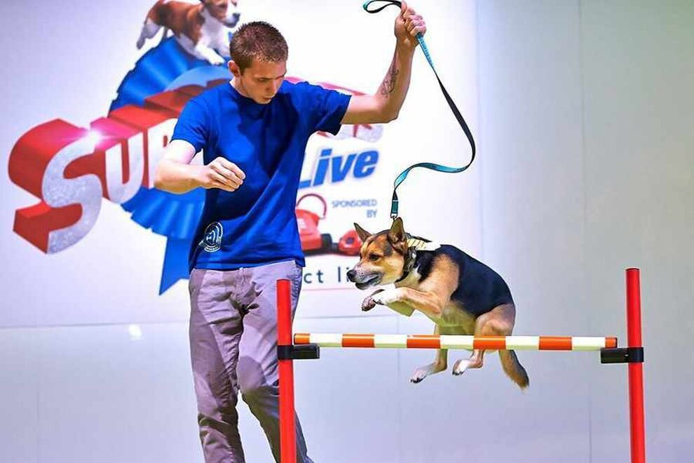 Victoria Stilwell Dog Training Shrewsbury