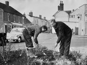 "nostalgia pic. Dawley. Rose planting outside the Lord Hill pub in Dawley on December 7, 1966. This is a print in the Shropshire Star picture archive and the caption pasted on the back reads: ""Mr Ronald Parr and Mr Arthur Davies, of Dawley Urban District Council parks department, working for a brighter Dawley. They are planting roses at Lord Hill."" The date written by the caption is 8.12.66, i.e. December 8, 1966, which will be when it was published. It has the Shropshire Star copyright stamp and the photographer's date is 7/12/66, which will be when it was taken. The photographer was W Bishton, i.e. Bill Bishton. Dawley street scene, general view. Library code: Dawley nostalgia 2021.."