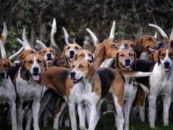 National Trust members to vote on trail hunting ban on estates