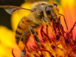 Bees are flying high thanks to the weather