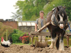 Acton Scott Working Farm. Photo: Cpl Lee Goddard.