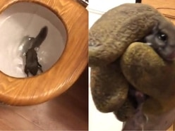Here's the story of how this squirrel ended up swimming inside a toilet bowl