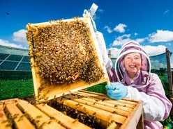 Telford entrepreneur taking bee business to the next level
