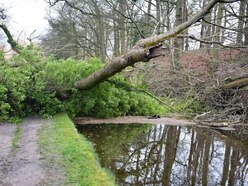 Fallen tree blocks Shropshire canal