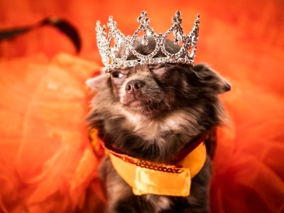 In pictures: Dogs wear crowns, tiaras and dresses for Furbabies dog pageant