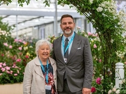 Milestone gold for David Austin Roses at Chelsea Flower Show