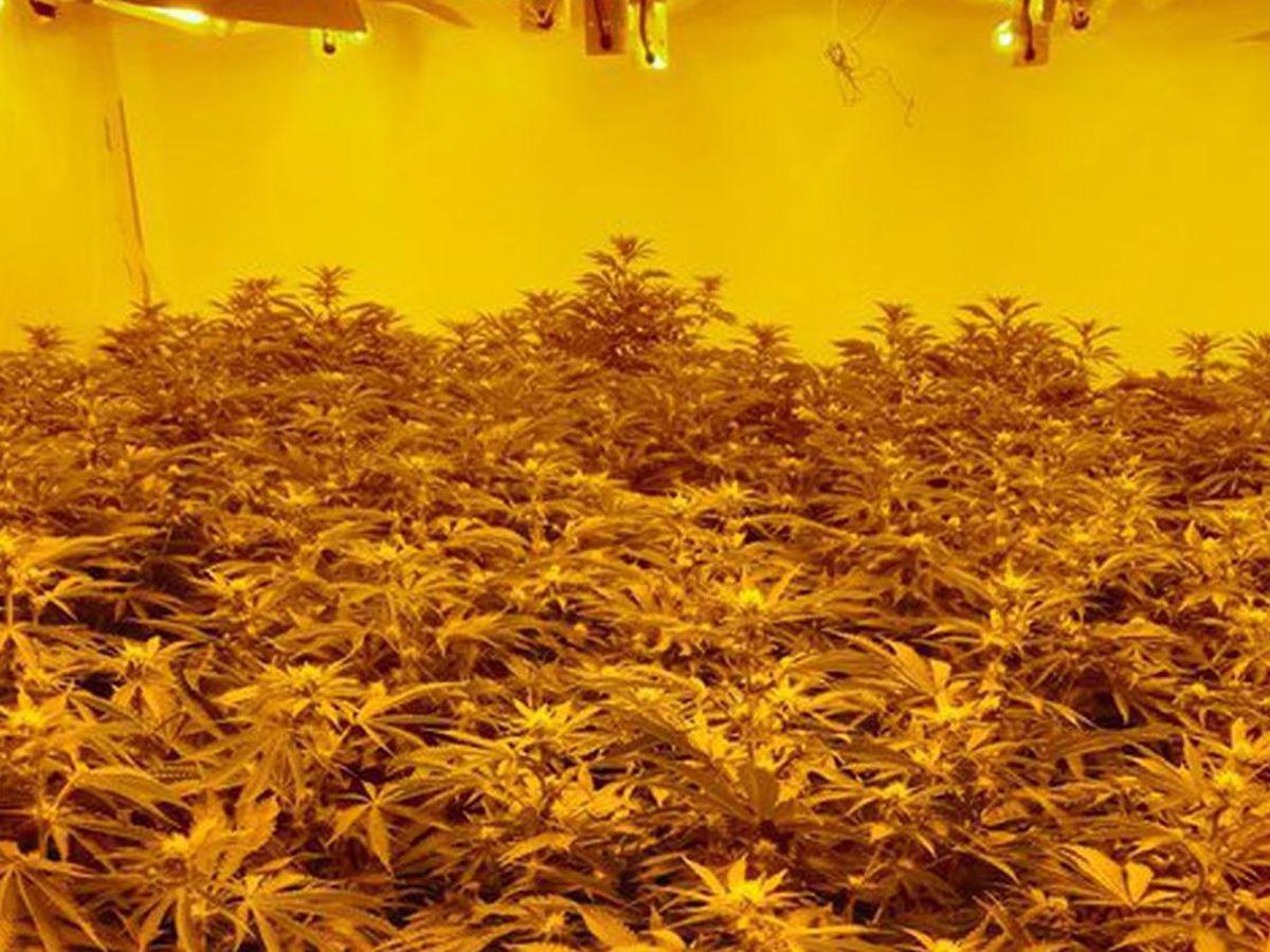 The cannabis farm in a house in Leegomery. Pic: @TelfordCops