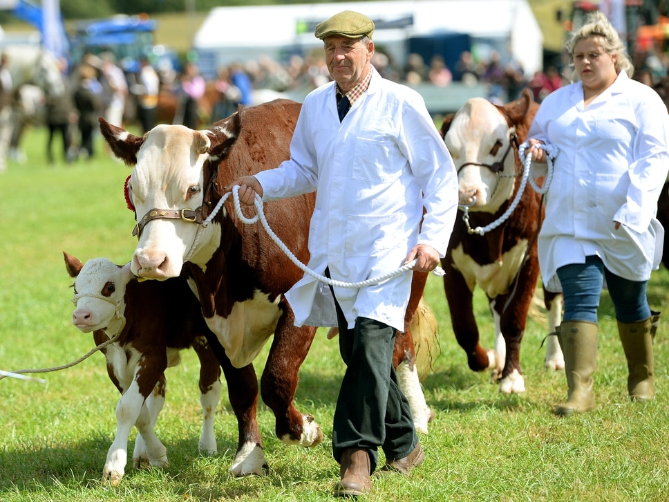 Thousands descend on Minsterley Show - in pictures