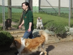 New kennels rules are a dog's breakfast says boss