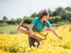 Blossoming wedding sector leads to huge harvest for Newport confetti company