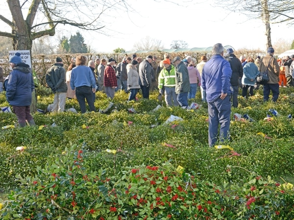 Crowds gather for Tenbury Wells mistletoe and holly auction