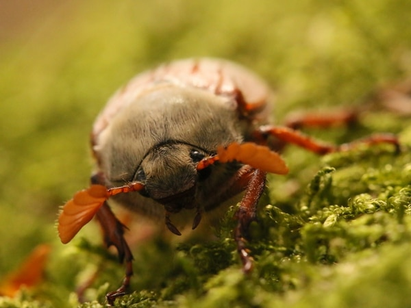 Bugs to badgers: Photography winners on show at Ironbridge exhibition