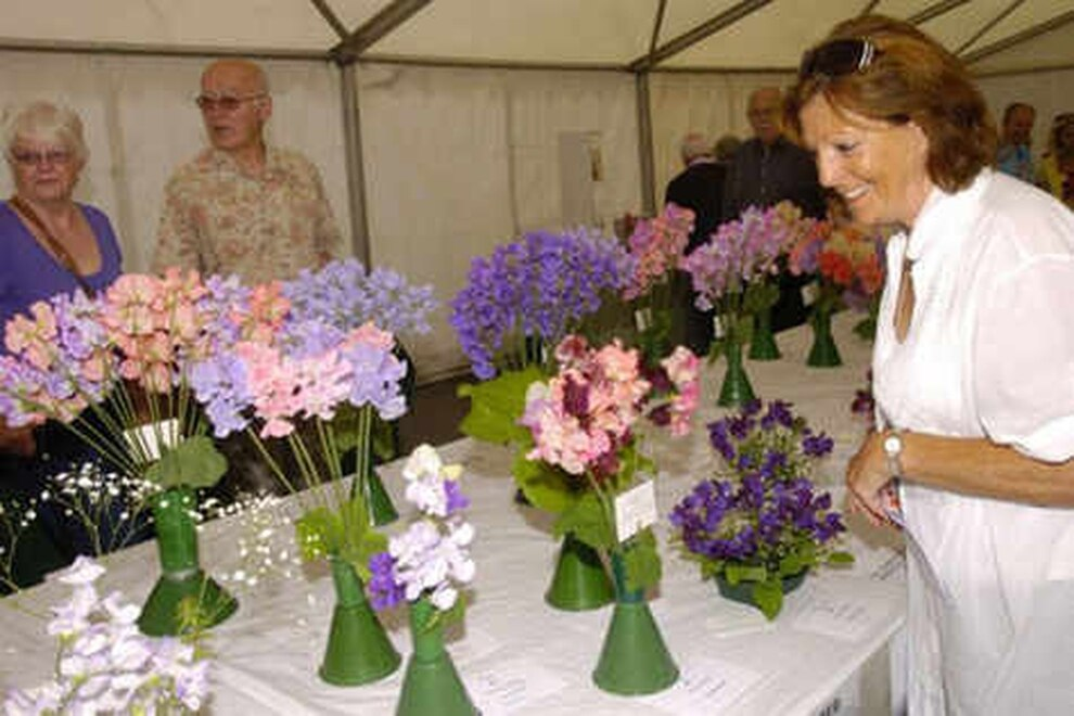 Wem Sweet Pea Show Pulls In Thousands In Pictures