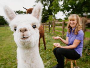Roz Edwards with Ozzie the alpaca