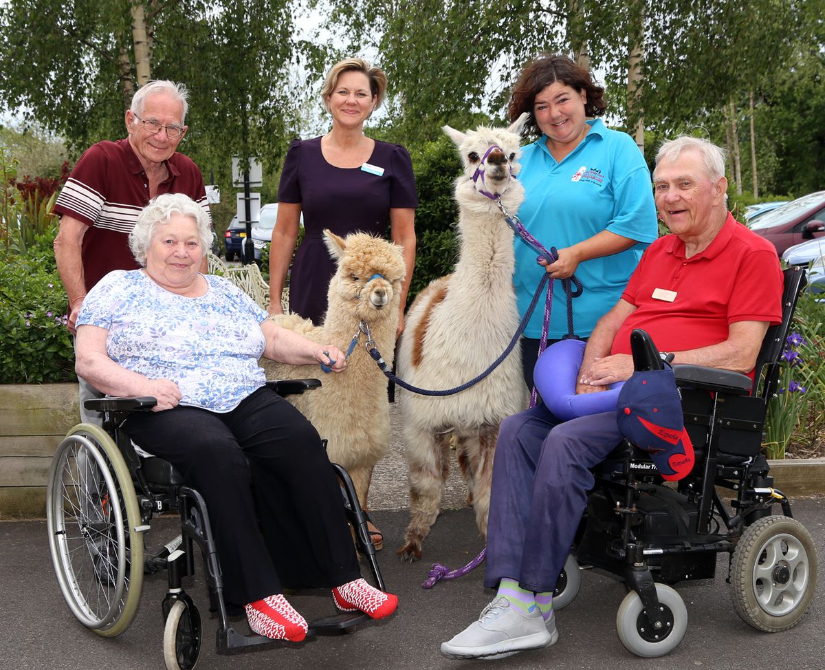 Fiona Glover of the Uplands, centre back, with Ray and Kath Buckley, left, David Williams, and Sarah Tickle of Admiral View Alpacas. The alpacas are Monty, left, and Alexandra.