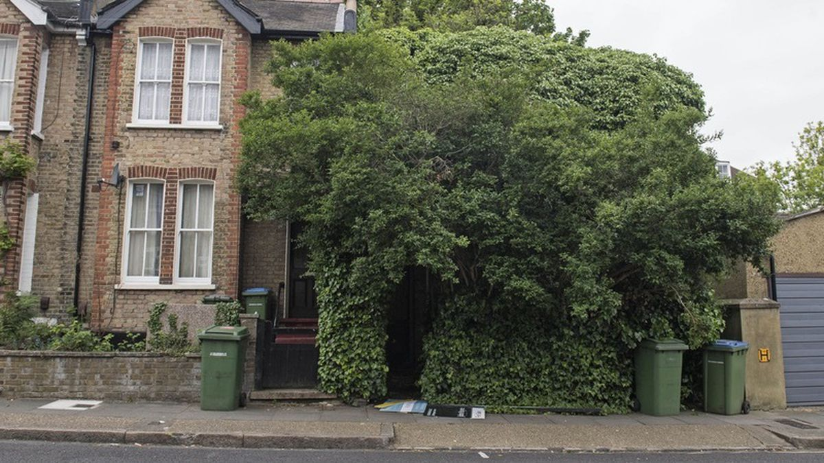 Can't see the house for the trees: Property engulfed in ivy sells for £500,000