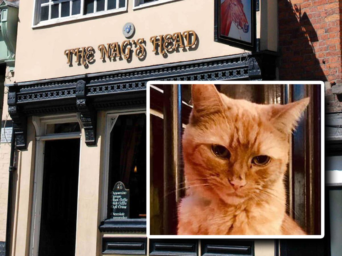 Indie the cat was a well-known face in the Nag's Head and on Wyle Cop