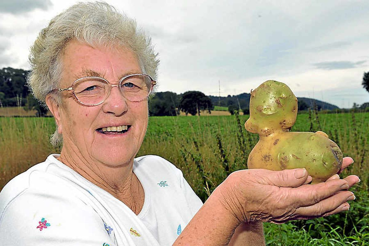 Keen grower Dorothea Clinton, from Peaton, near Ludlow, with her duck-shaped potato