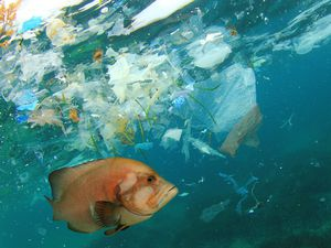 Every day approximately eight million pieces of plastic pollution find their way into our oceans