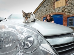 Listen to that engine purr: Kitten found under bonnet of car by Shrewsbury driver