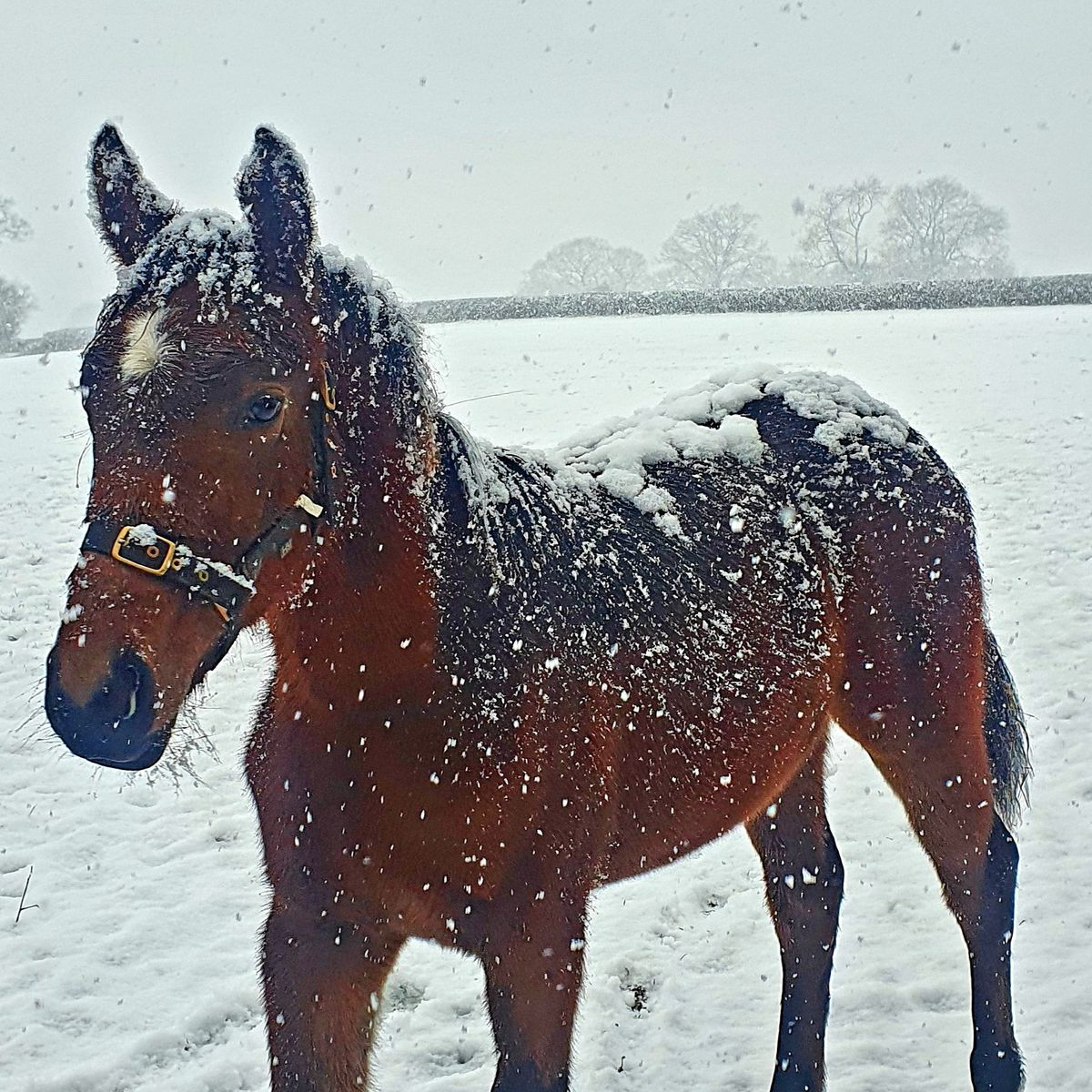 Eight-month-old foal Polly enjoying the snow in Albrighton. Photo: Tracey Sharp
