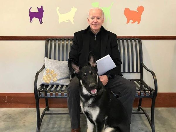 Joe Biden and his dog Major, one of two dogs owned by the Bidens