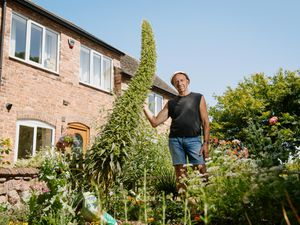 Mike Crump has successfully grown an 11ft Echium biennial shrub, usually found in the Canary Islands, in his garden
