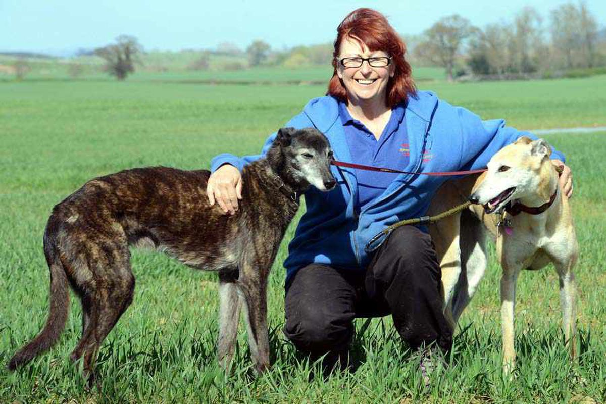 Sue Tipton from Moorlands Kennels in Condover