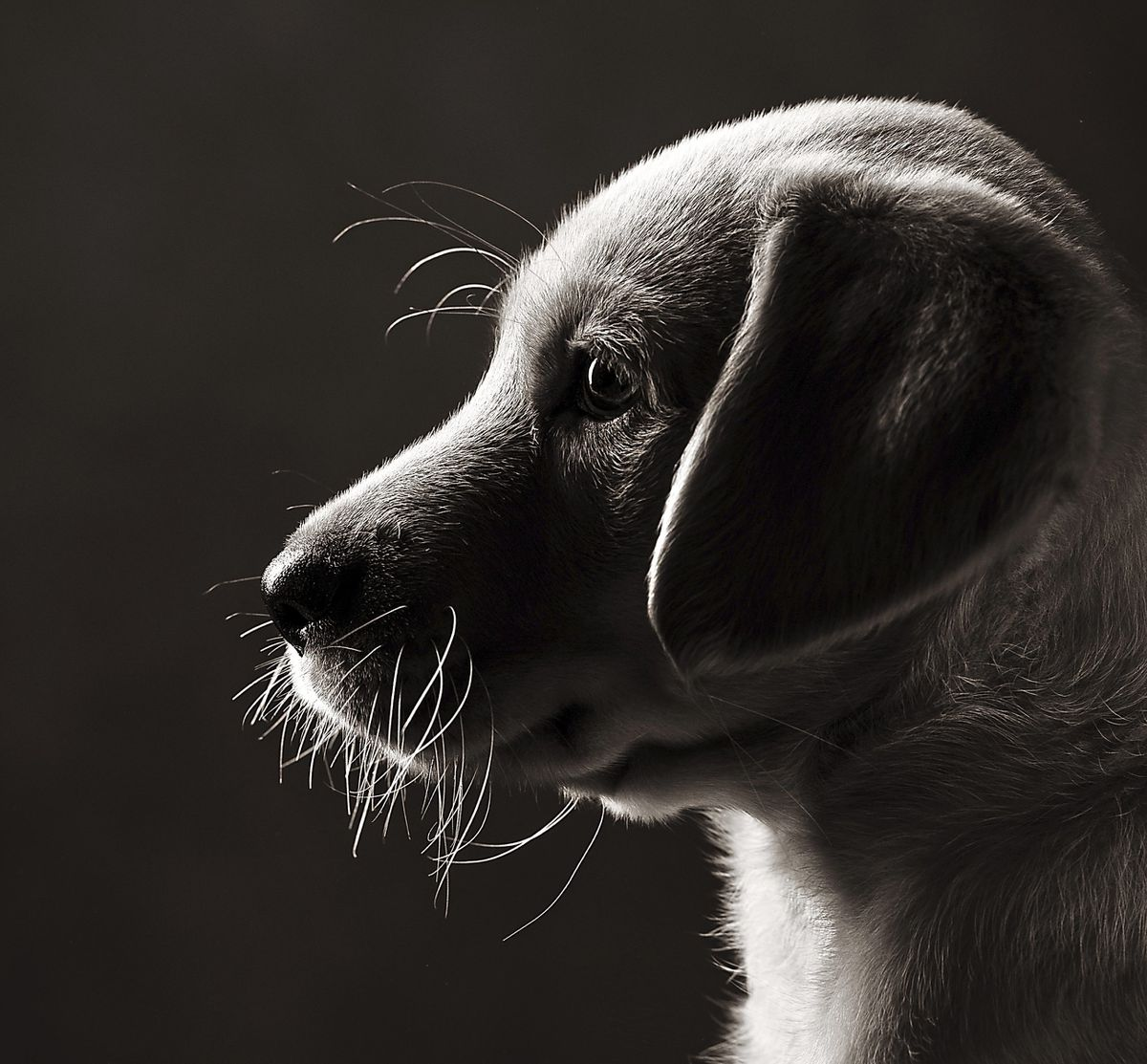 Jane's puppy photograph won praise from the Master Photographers Association