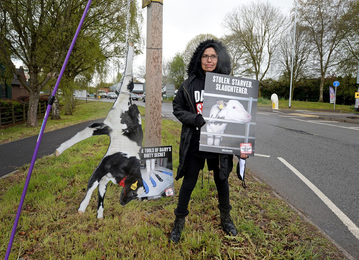The protest signs included cut-outs depicting calves hung upside down
